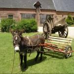 Visite ferme 76- Ferme pedagogique - La ferme au fil des saisons - Balades ânes
